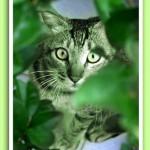 Gato verde 1