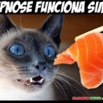 Hipnose e gato